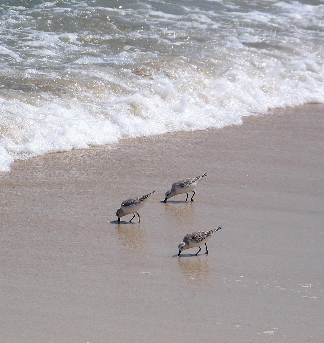 Fauna - Pájaros costeros Colombia