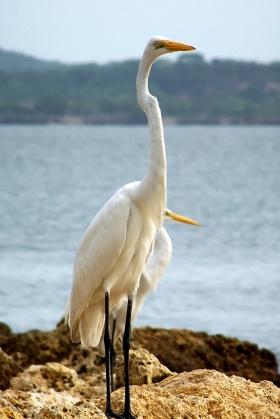Cartagena - Garza Blanca