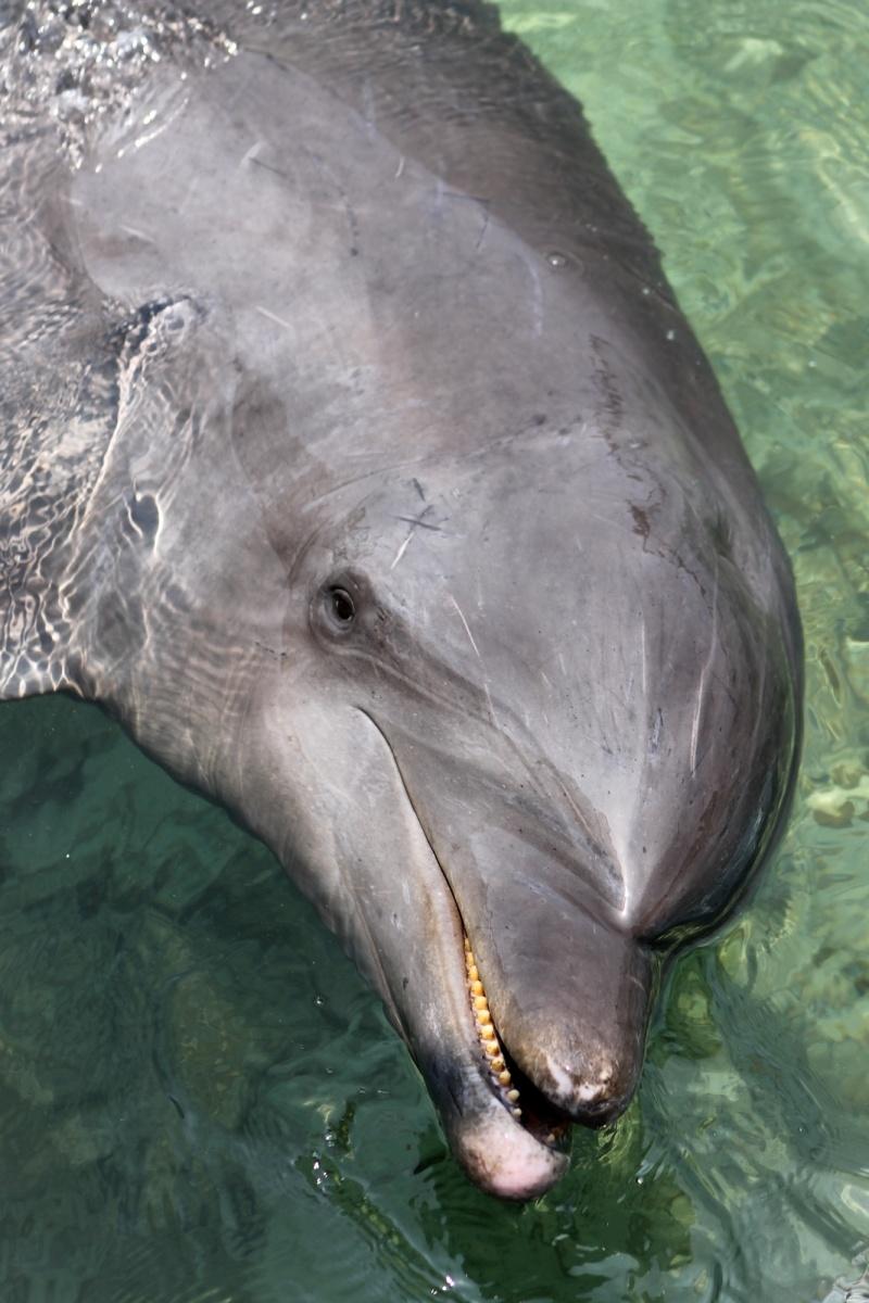 Fauna - Delfin - Islas del Rosario - Cartagena - Colombia